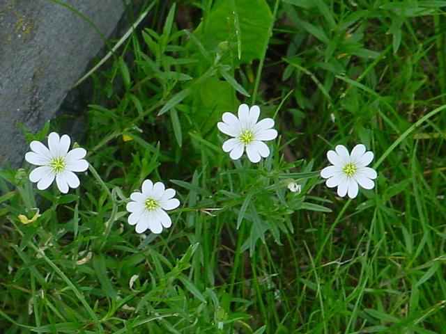 Comment s'appelle cette fleur ? 00110