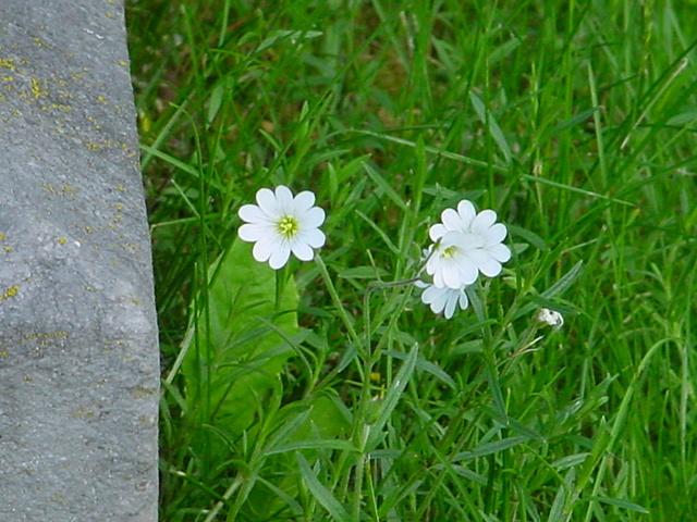 Comment s'appelle cette fleur ? 00410