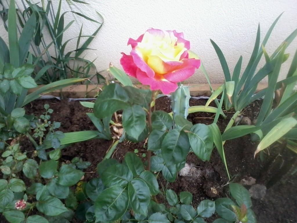 le bassin floral d'été de mes anodonte et moules naine - Page 6 2016-020