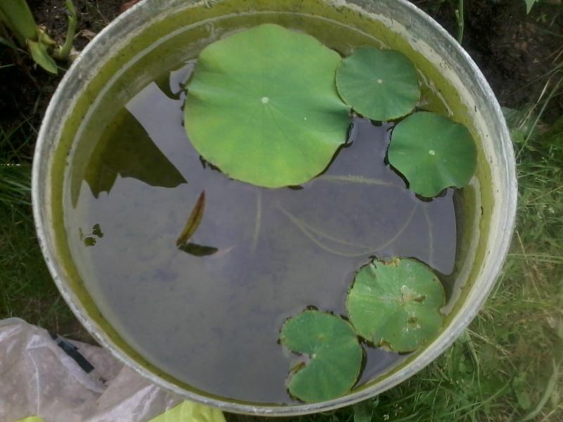 reamenagement de mon bassin de jardin - Page 8 2016-145
