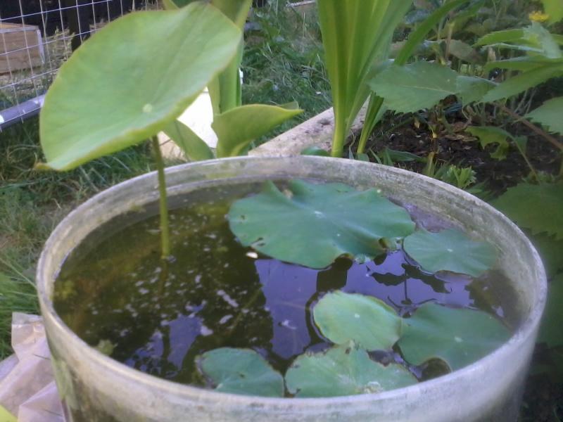reamenagement de mon bassin de jardin - Page 8 2016-180