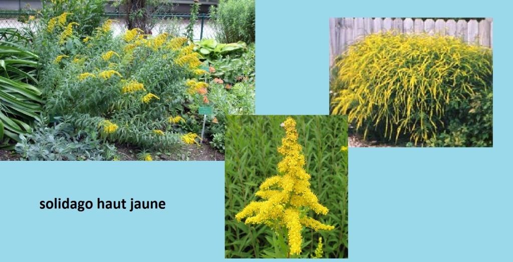 le bassin floral d'été de mes anodonte et moules naine - Page 6 41967910