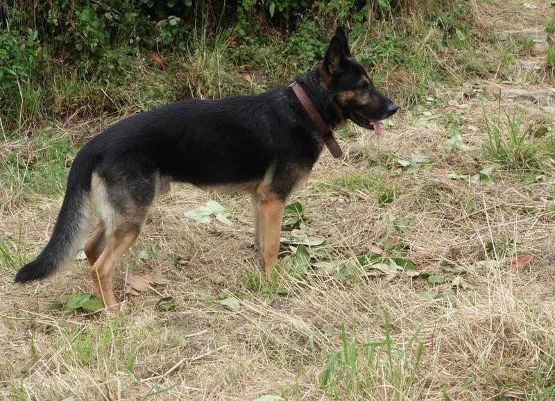 Photos de vous et vos chiens en pleine activité (course, vtt,ring, ..) Dsc04710