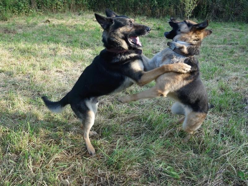 Photos de vous et vos chiens en pleine activité (course, vtt,ring, ..) Dsc05110