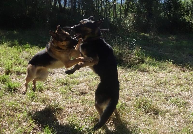 Photos de vous et vos chiens en pleine activité (course, vtt,ring, ..) Dsc05310