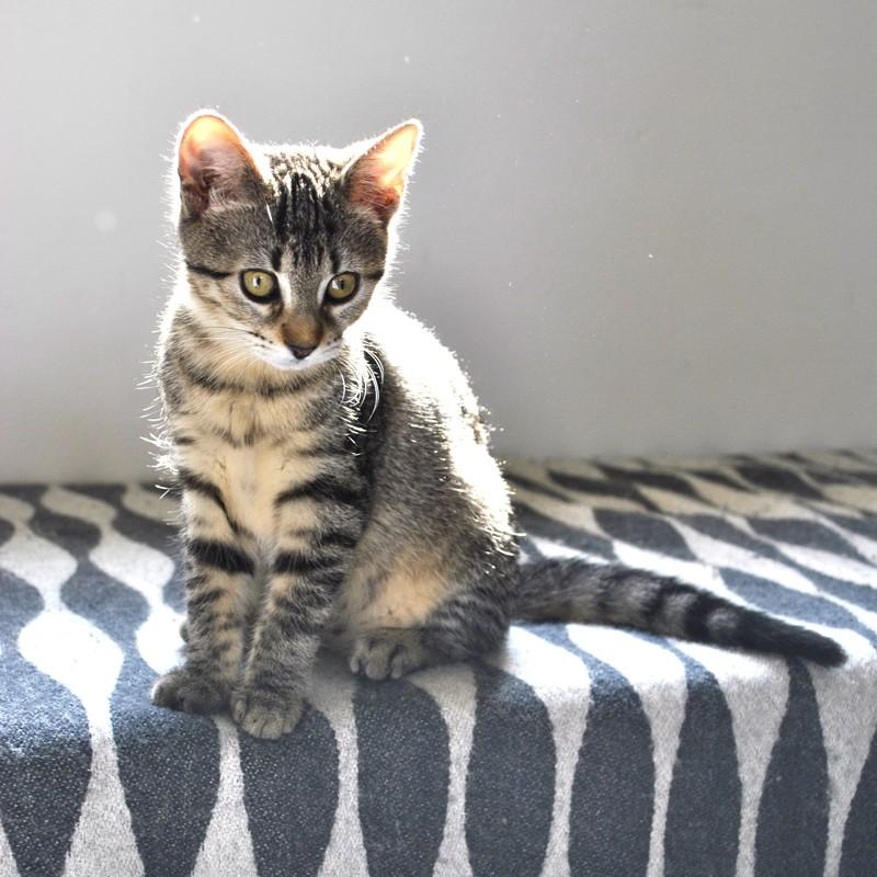 Janet, femelle type européenne tigrée, née le 15 juin 2014 - Page 9 _dsc0111