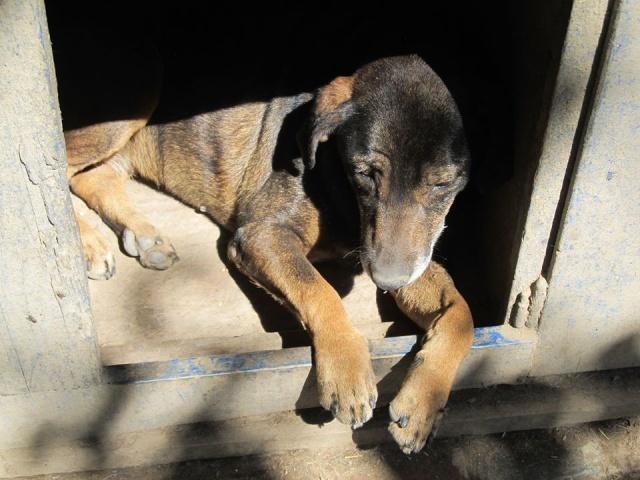 novembre 2020 - INNA - née 2011 - 13 kg - timide et gentille - (BELLA) - PRÊTE EN OCTOBRE 2020 05_07_43