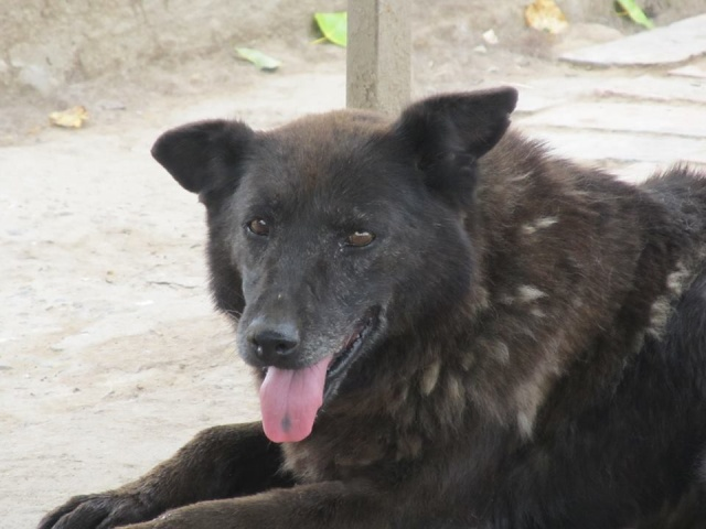 TZRNA I, F-X, née 2005, 18 kg (BELLA) - Prise en charge ASSO DES PATOUNES POUR LA VIE 18_06120