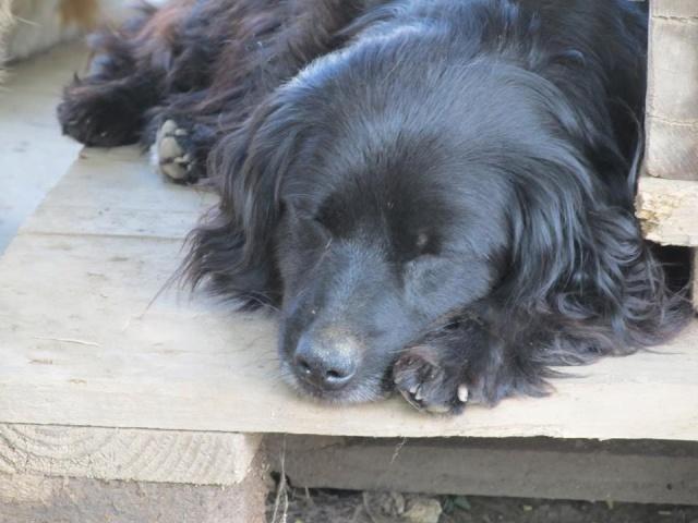 LILIE, F-X, née 2011/2012, 8 kg (BELLA) Prise en charge CCTNA - Page 2 29_06_82