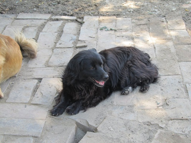 LILIE, F-X, née 2011/2012, 8 kg (BELLA) Prise en charge CCTNA - Page 2 29_06_83