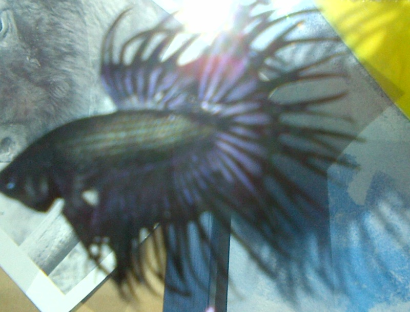 Mon petit Cobalt  Img-2010