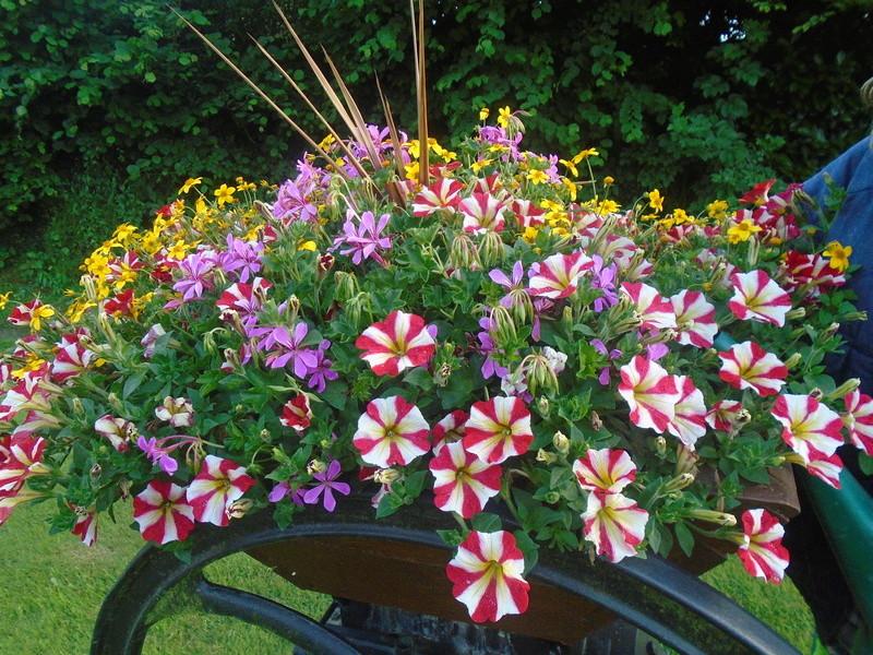 fleurs de fouqueville Fleurs72