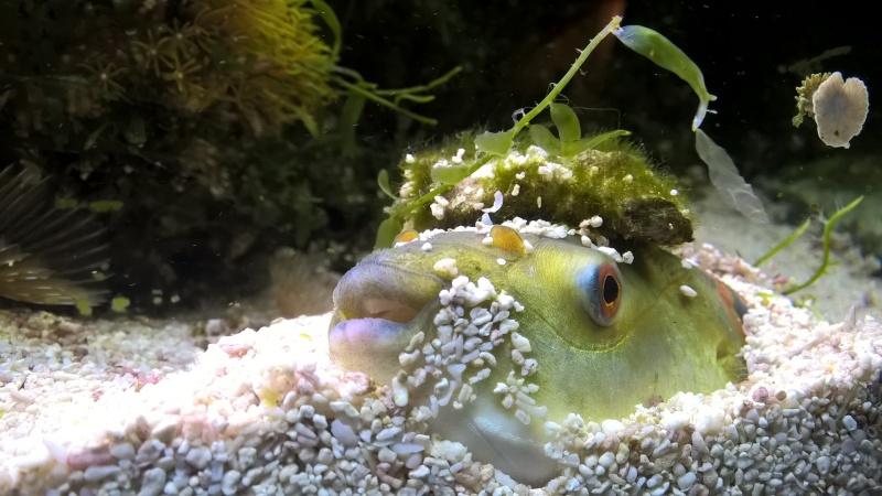 Ce post pour des photos marrantes de vos aquariums Wp_20110