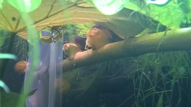 Ce post pour des photos marrantes de vos aquariums Wp_20111