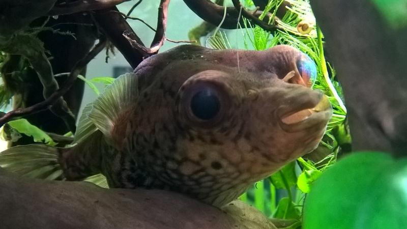 Ce post pour des photos marrantes de vos aquariums Wp_20112