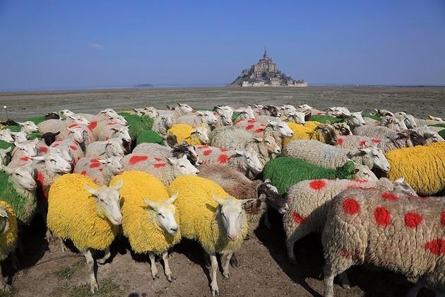La photo du jour Mouton10