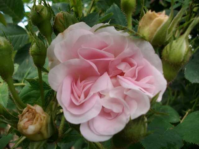 Le jardin en rose ! Cuisse11