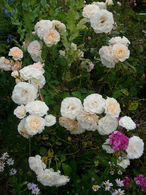 Poustinia Rose_p10