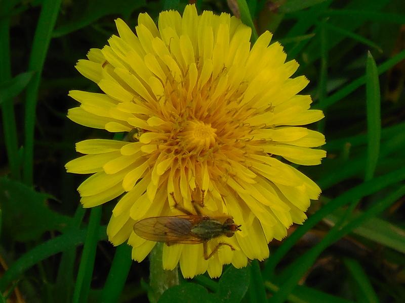 fiore Dscn1412