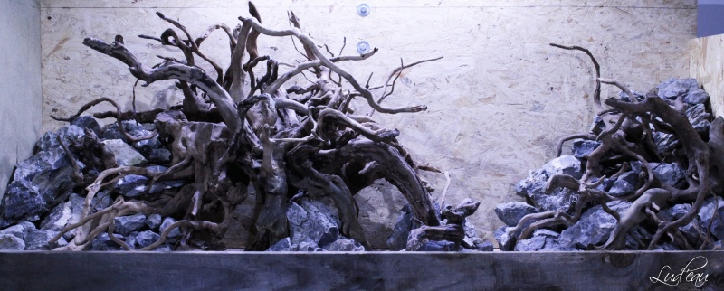 Medusa's spirit Img_8410