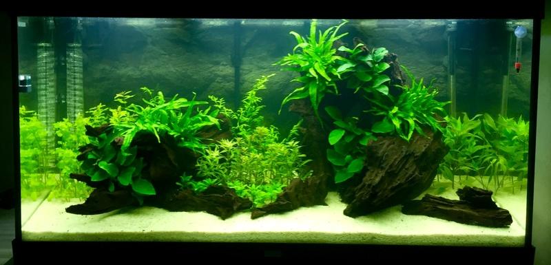 Aquarium juwel rio 300 - Page 2 Image20