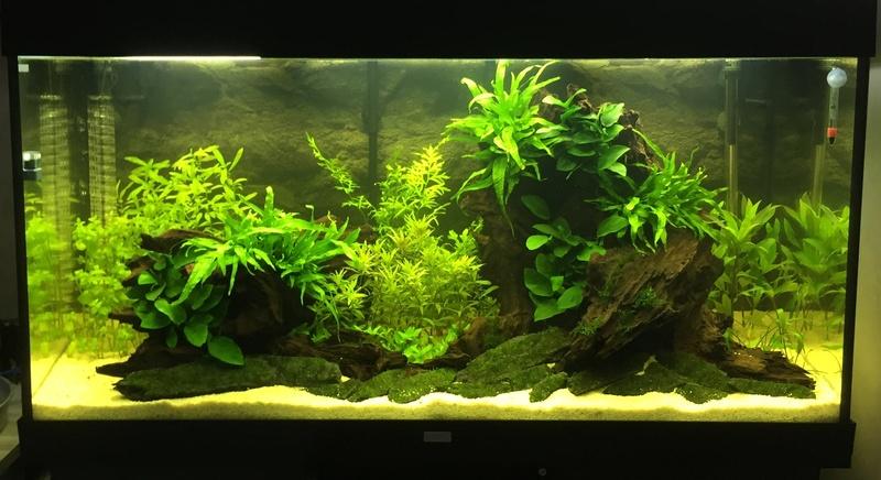 Aquarium juwel rio 300 - Page 2 Image25