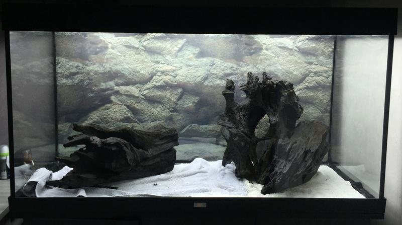 Aquarium juwel rio 300 Img_9312