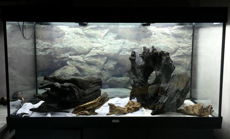 Aquarium juwel rio 300 Img_9313