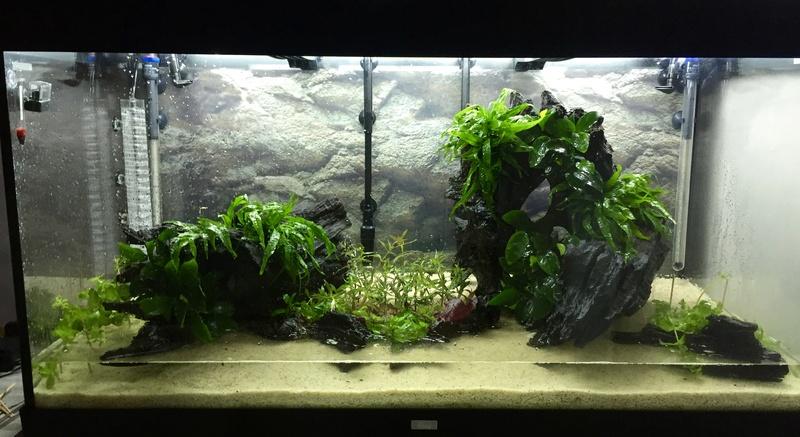 Aquarium juwel rio 300 Img_9417