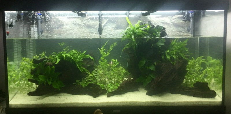 Aquarium juwel rio 300 Img_9418