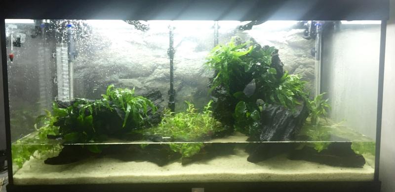 Aquarium juwel rio 300 Img_9419
