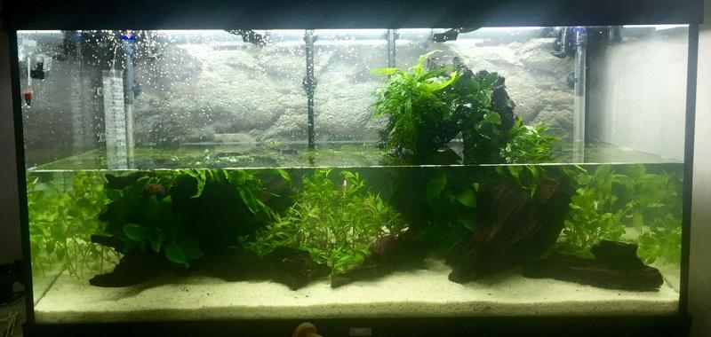 Aquarium juwel rio 300 Img_9420