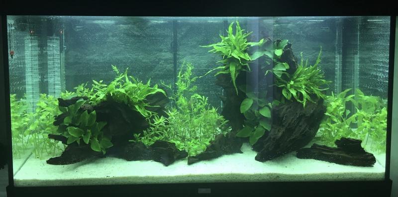 Aquarium juwel rio 300 Img_9421