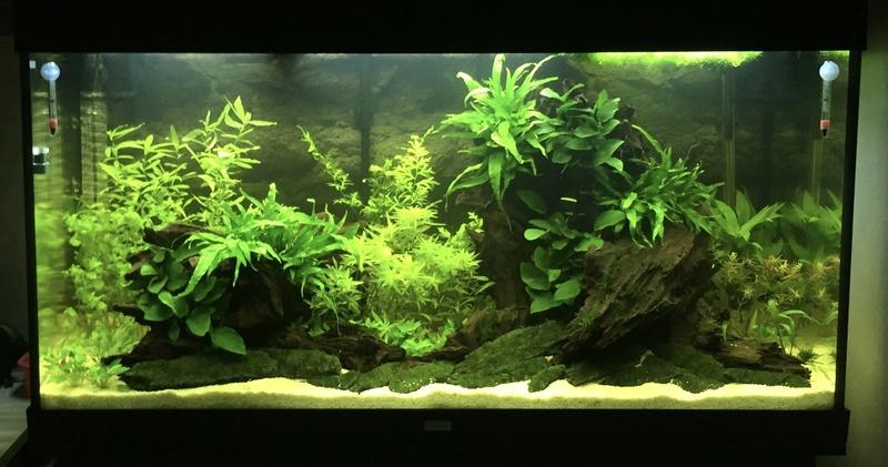 Aquarium juwel rio 300 - Page 2 Img_9510