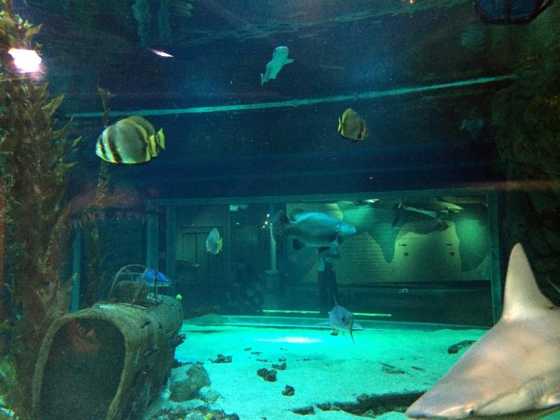 Sortie en famille aquarium Seaquarium Le Grau Du Roi Img_2110