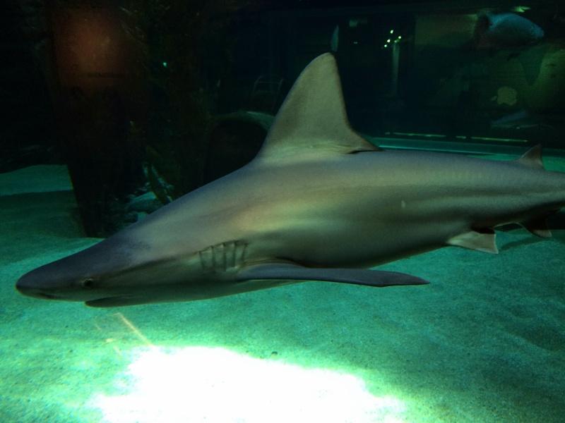 Sortie en famille aquarium Seaquarium Le Grau Du Roi Img_2111
