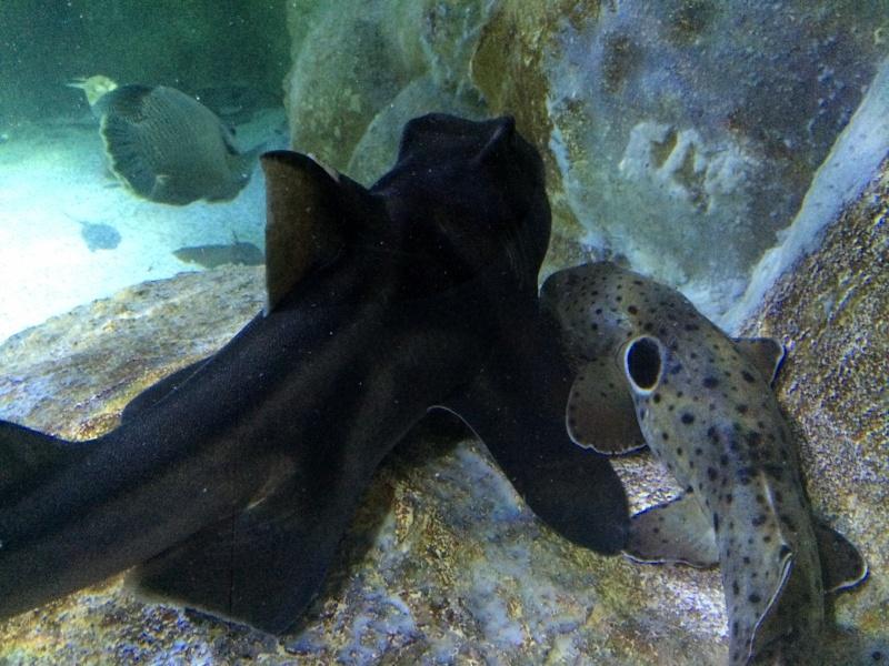 Sortie en famille aquarium Seaquarium Le Grau Du Roi Img_2113
