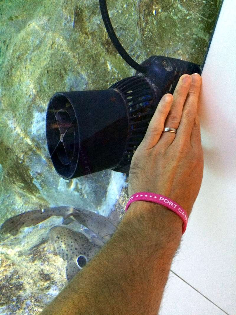 Sortie en famille aquarium Seaquarium Le Grau Du Roi Img_2114