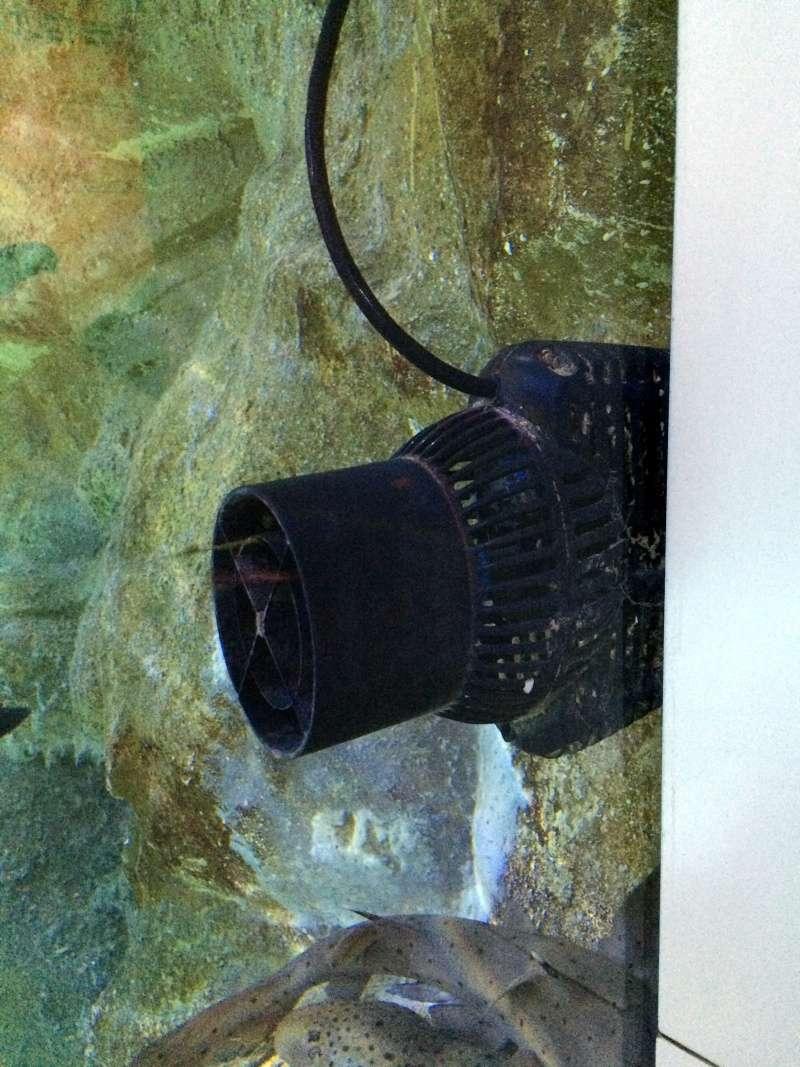 Sortie en famille aquarium Seaquarium Le Grau Du Roi Img_2116
