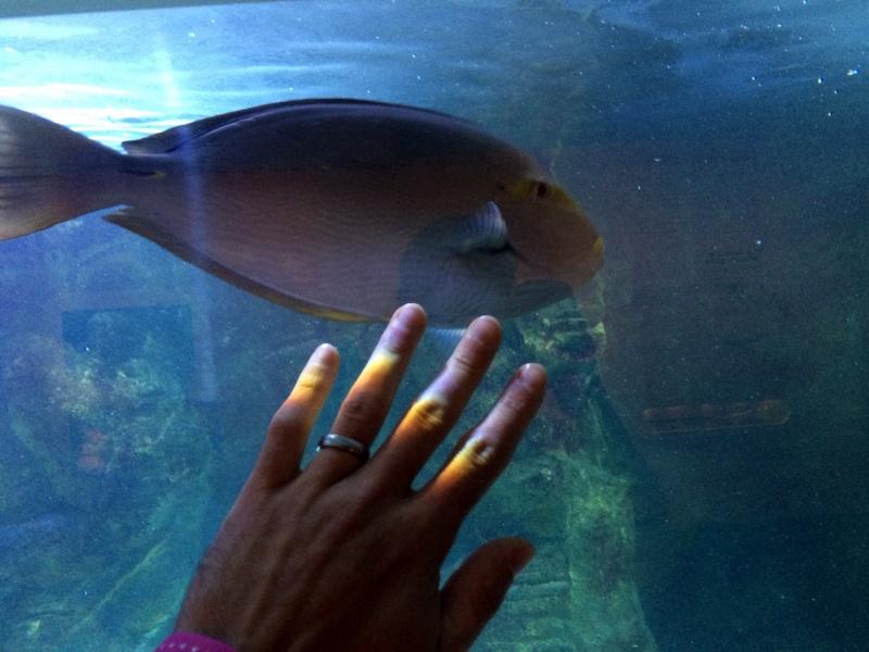 Sortie en famille aquarium Seaquarium Le Grau Du Roi Img_2117