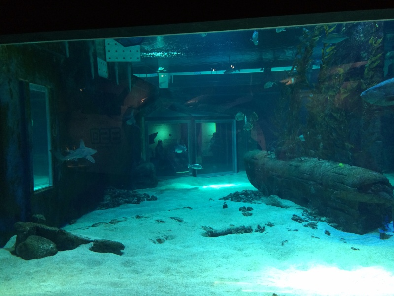 Sortie en famille aquarium Seaquarium Le Grau Du Roi Img_2118