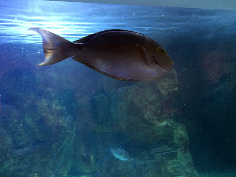 Sortie en famille aquarium Seaquarium Le Grau Du Roi Img_2119