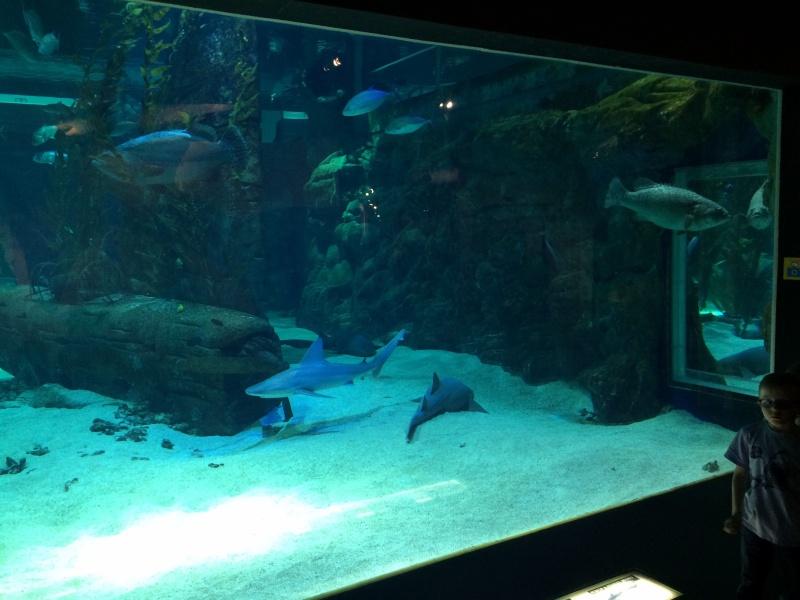 Sortie en famille aquarium Seaquarium Le Grau Du Roi Img_2120