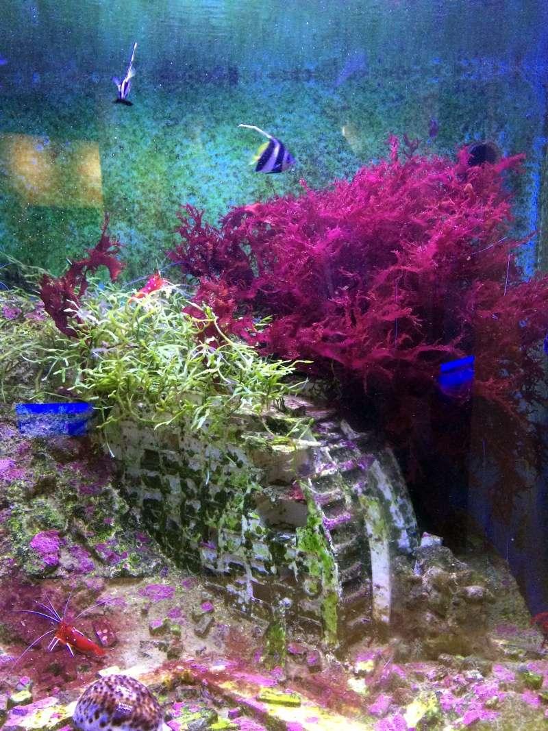 Sortie en famille aquarium Seaquarium Le Grau Du Roi Img_2121