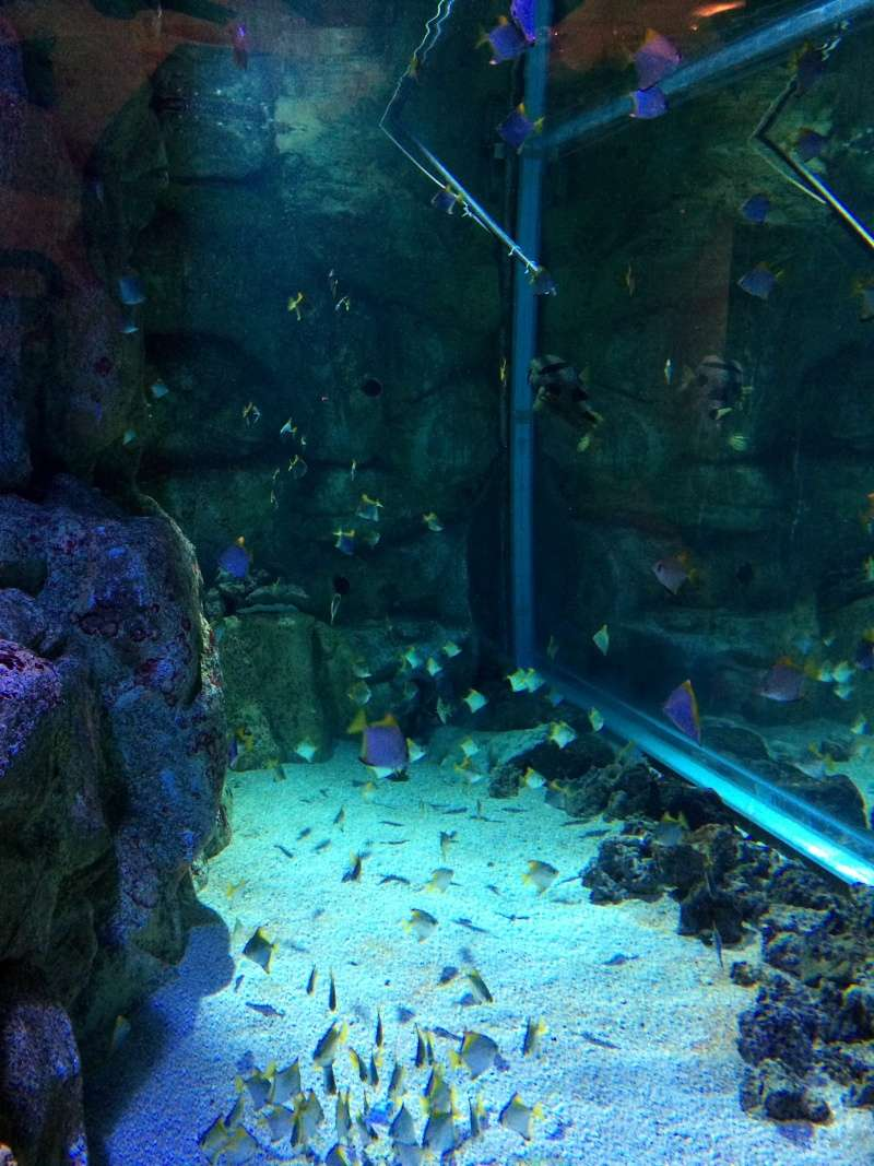Sortie en famille aquarium Seaquarium Le Grau Du Roi Img_2122