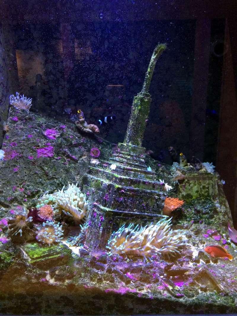 Sortie en famille aquarium Seaquarium Le Grau Du Roi Img_2123