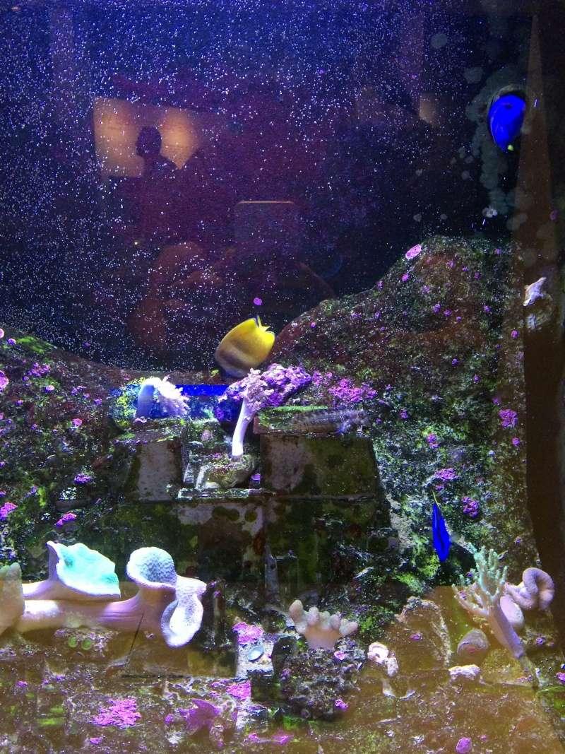 Sortie en famille aquarium Seaquarium Le Grau Du Roi Img_2124