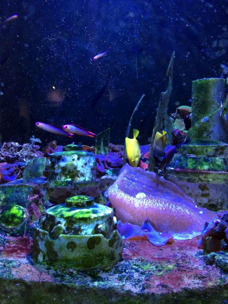 Sortie en famille aquarium Seaquarium Le Grau Du Roi Img_2126