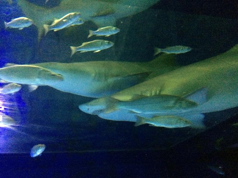 Sortie en famille aquarium Seaquarium Le Grau Du Roi Img_2127