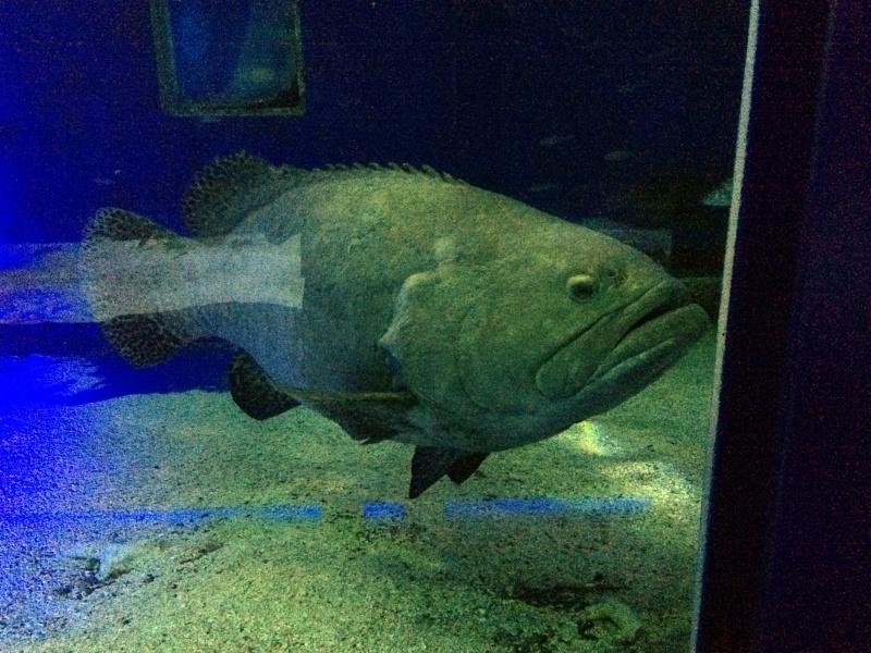 Sortie en famille aquarium Seaquarium Le Grau Du Roi Img_2130